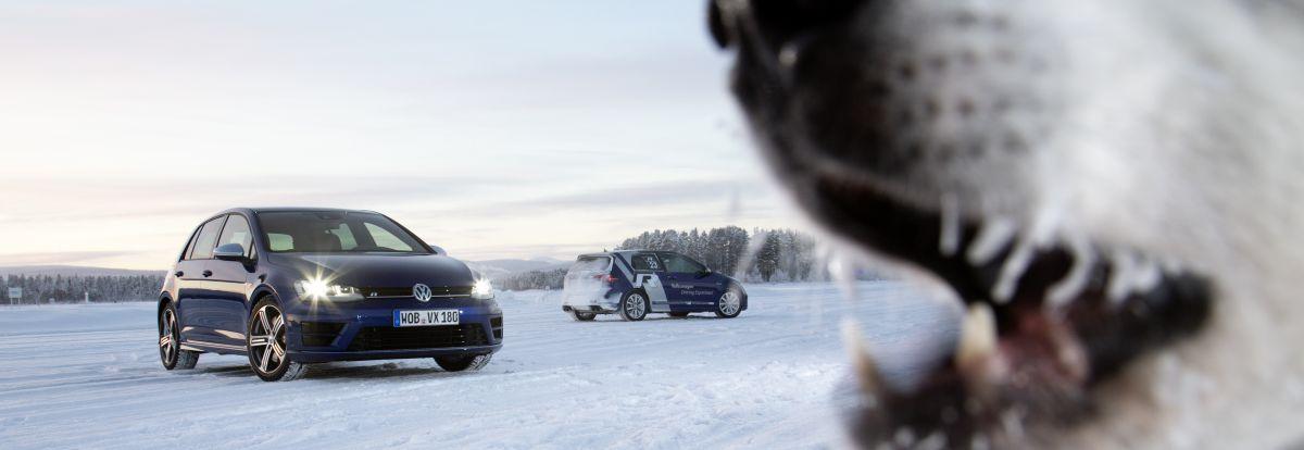 VW Golf R mit der passenden Begleitung. Foto: VW