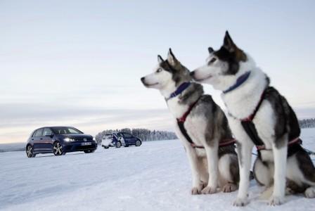 VW Golf R mit Huskies, Foto: VW